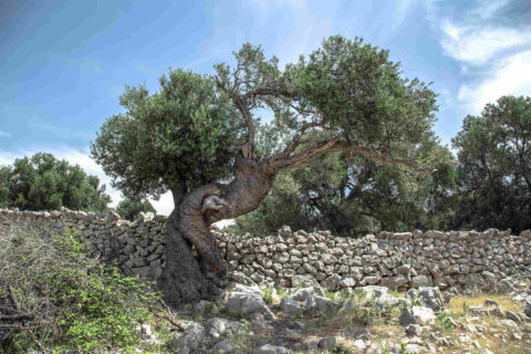 arbre solidatech header